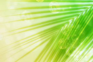 leaf wallpaper palm