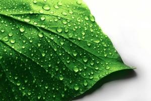 leaf wallpaper wet
