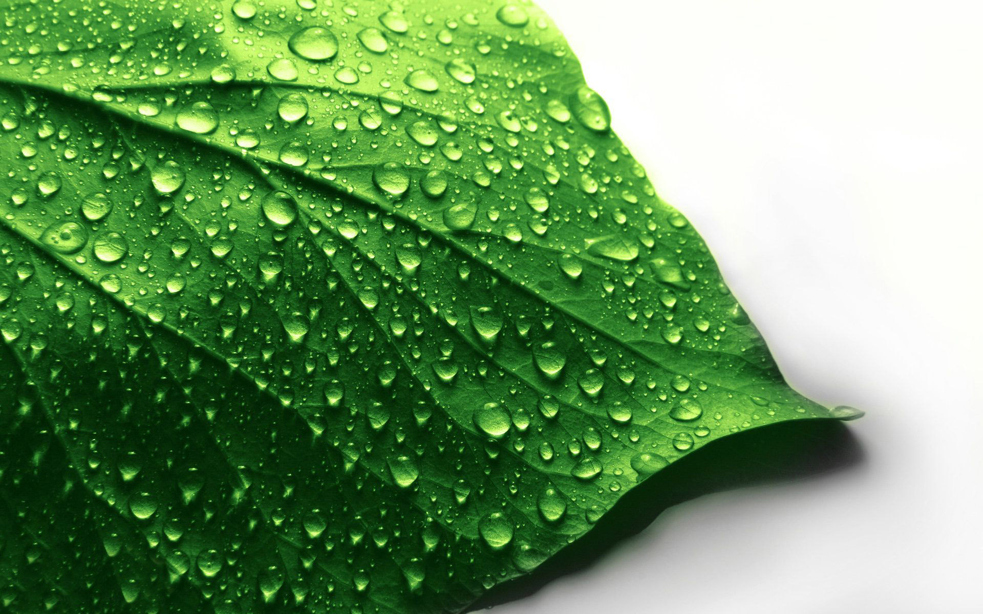 leaf wallpaper wet