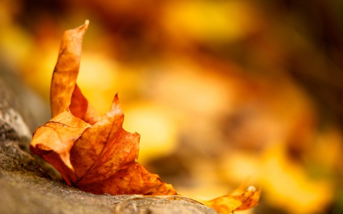 leaves autumn background