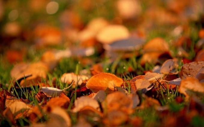 leaves autumn nice