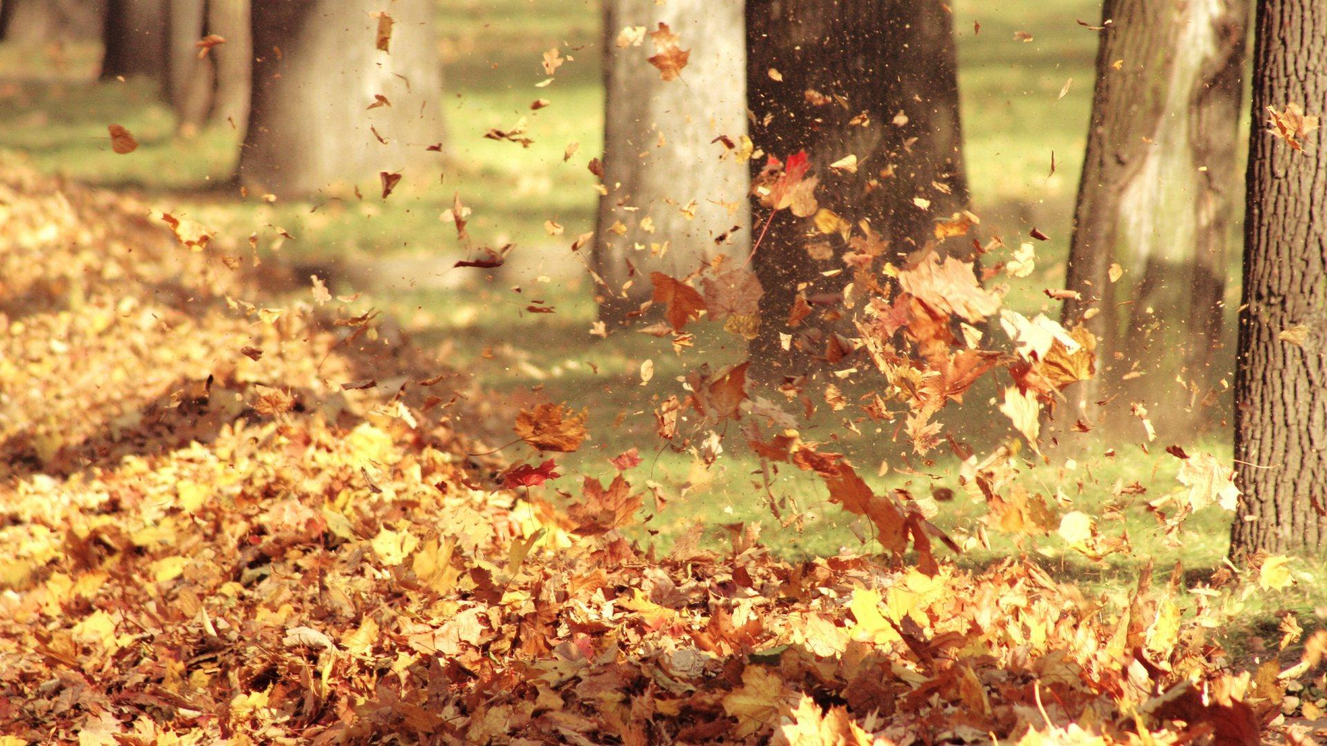 leaves autumn unique