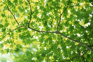 leaves background download
