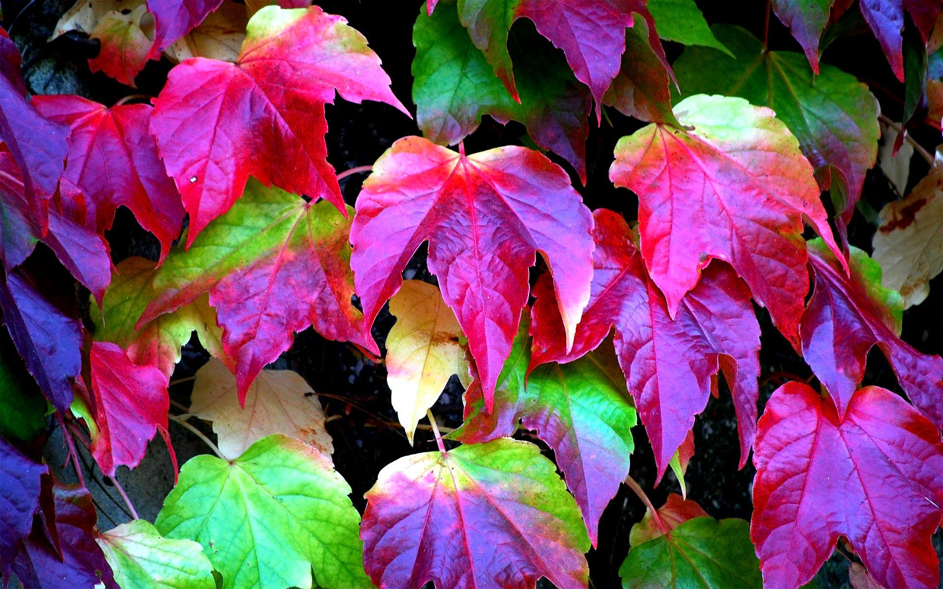 Leaves Colors - HD Desktop Wallpapers
