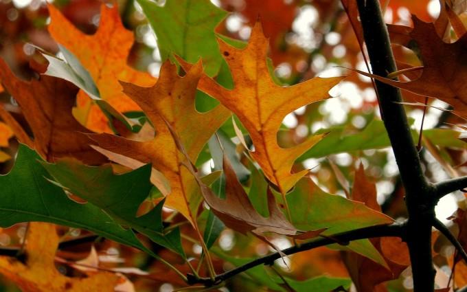 leaves dark