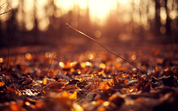 leaves images 1080p