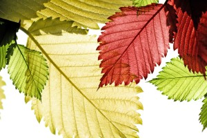 leaves images desktop