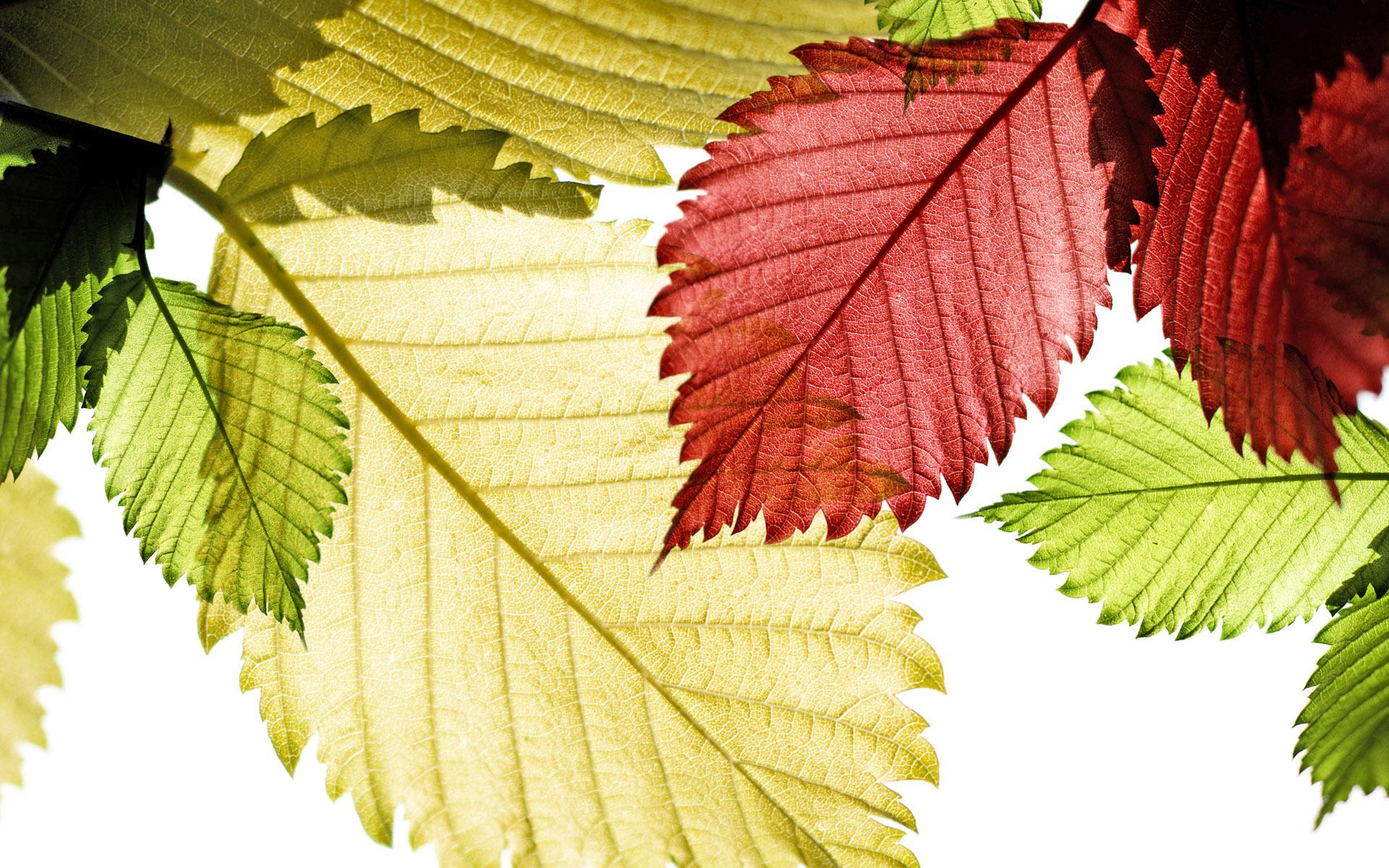 leaves images desktop