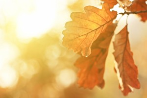 leaves images download