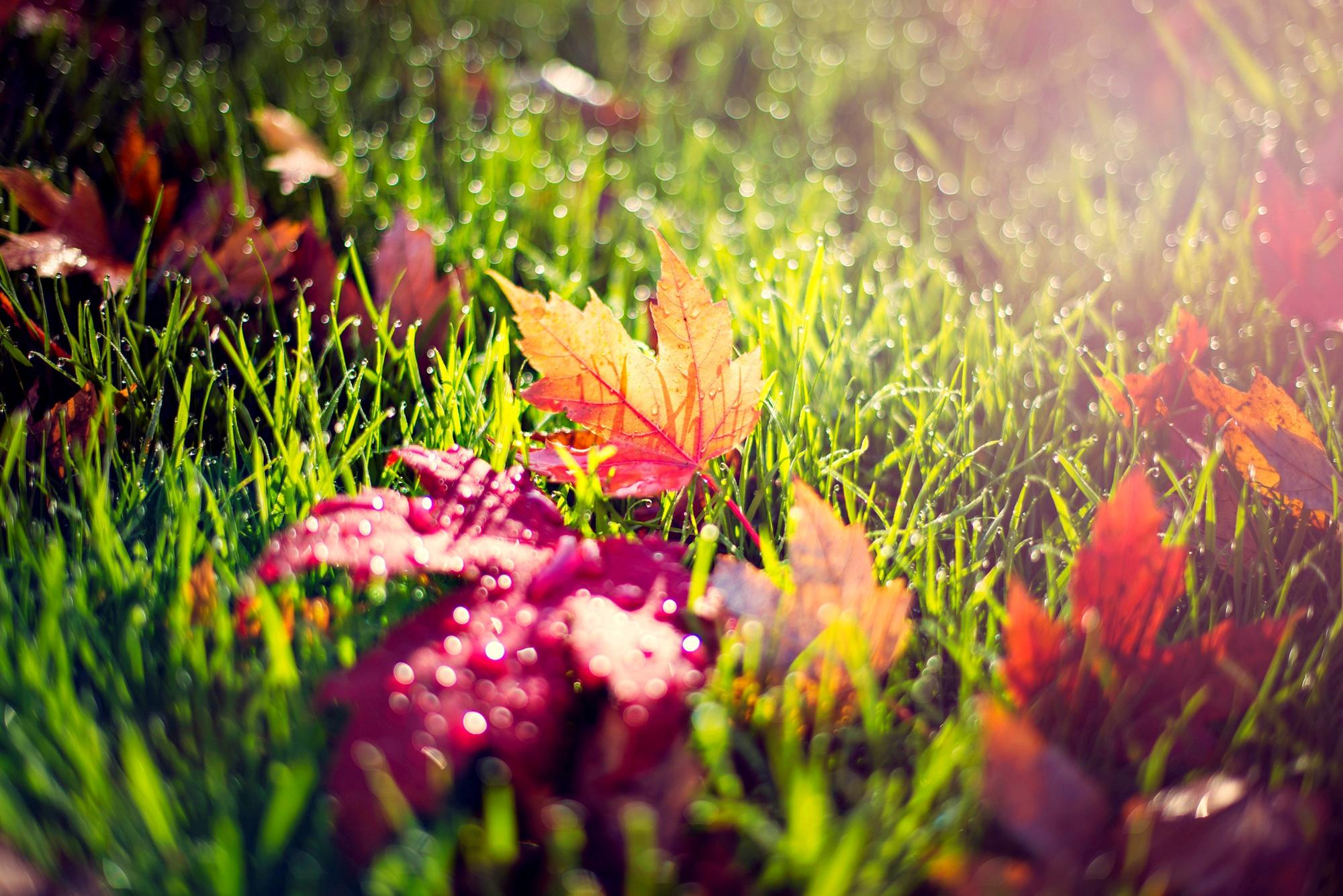 leaves images