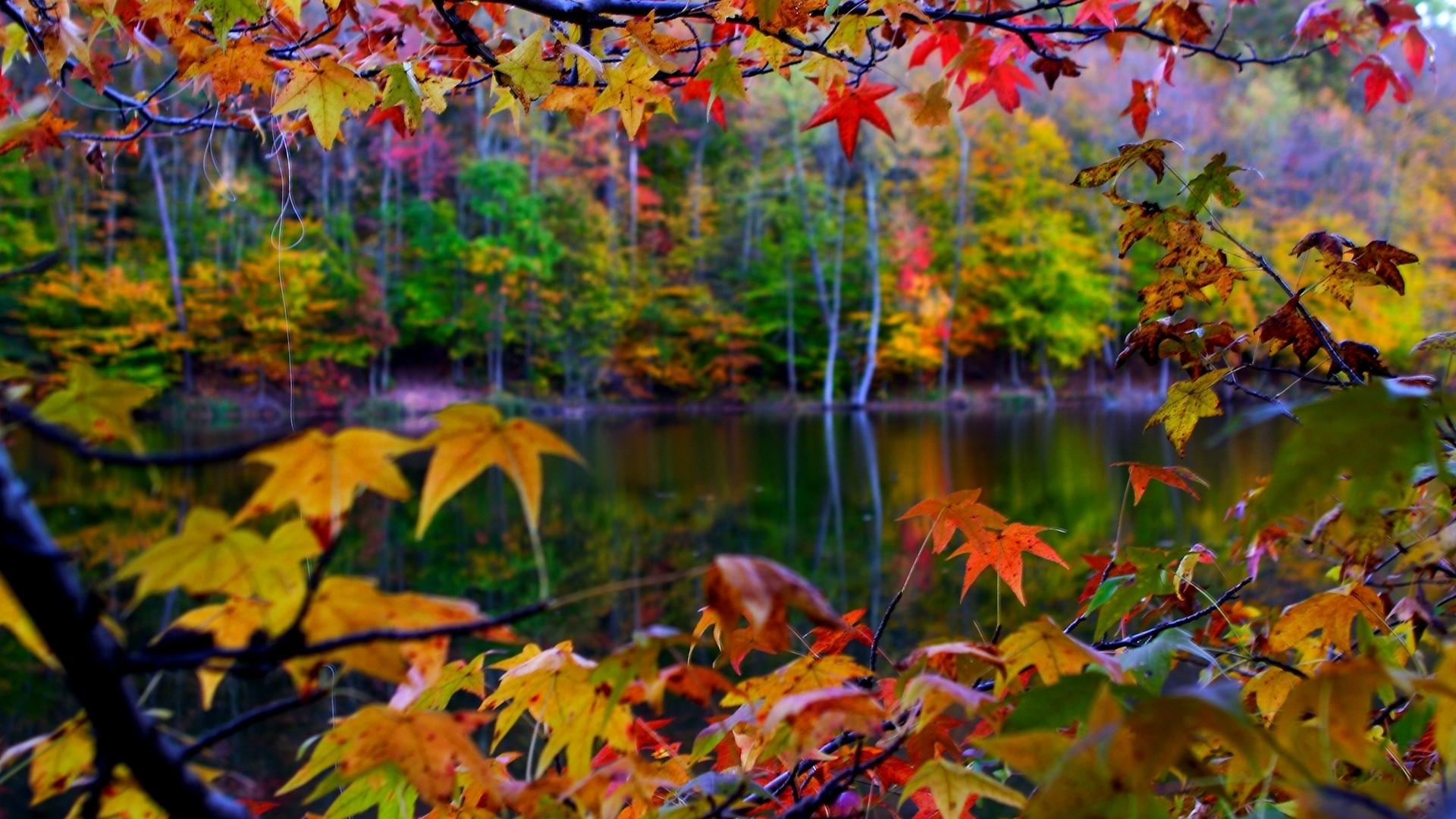 leaves landscape