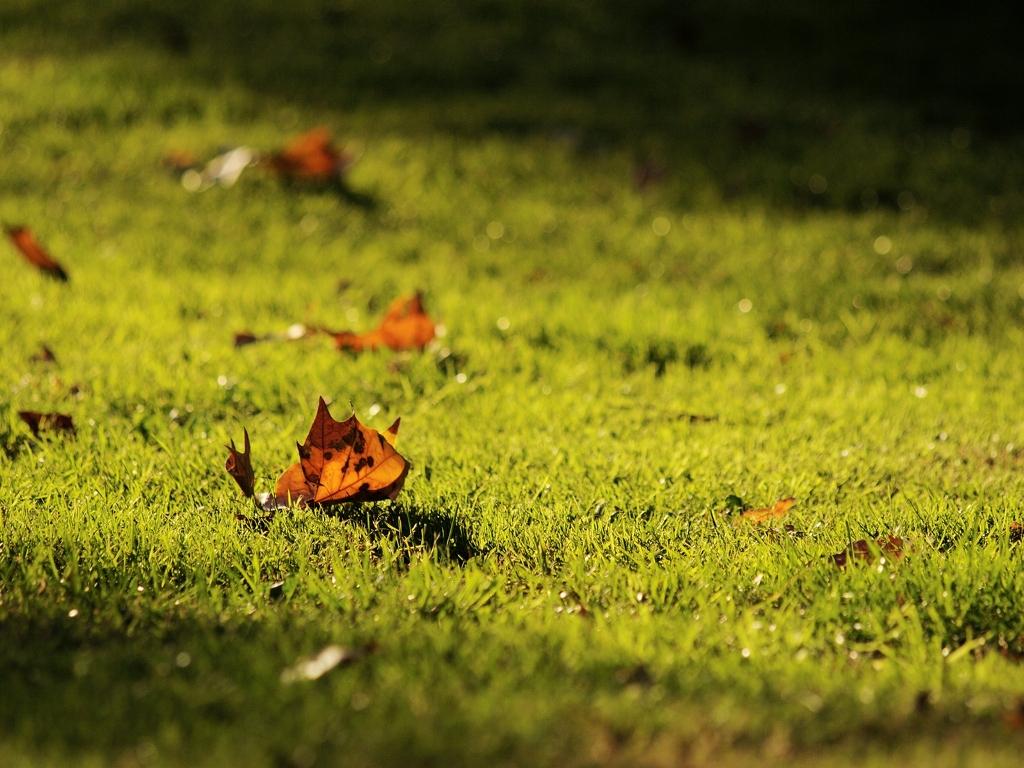 leaves meadow