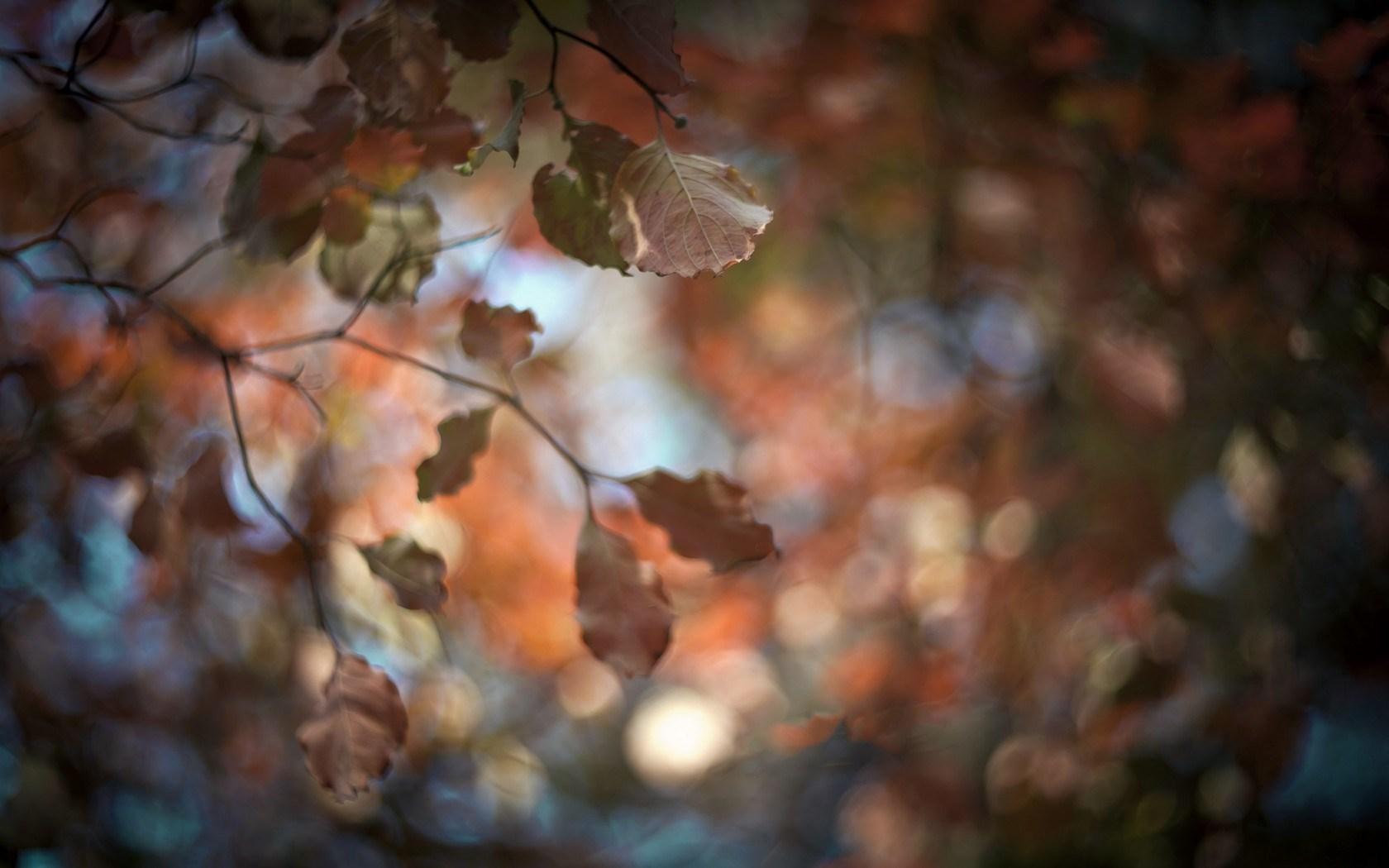 leaves picture autumn blur