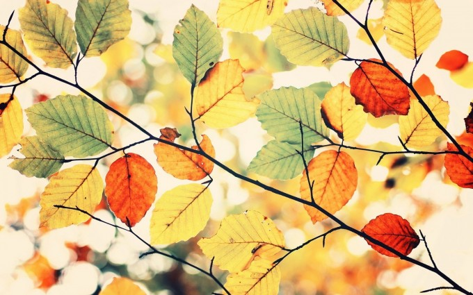 leaves picture colors