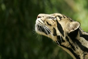 leopard photos hd