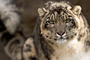 leopard print images