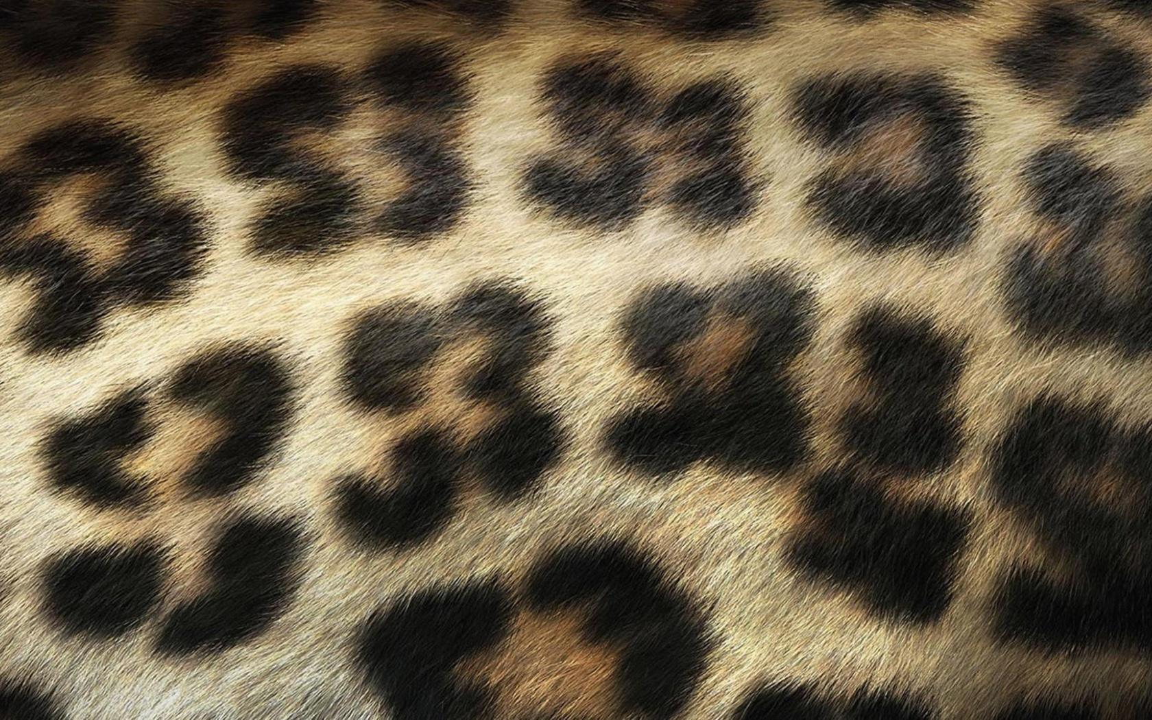 leopard print wallpaper for bedroom