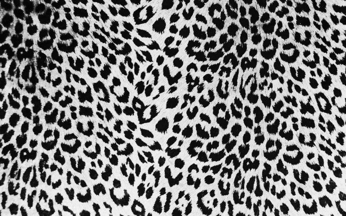 leopard print wallpaper hd