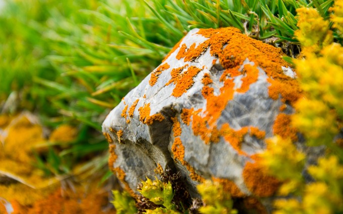 lichen wallpaper hd