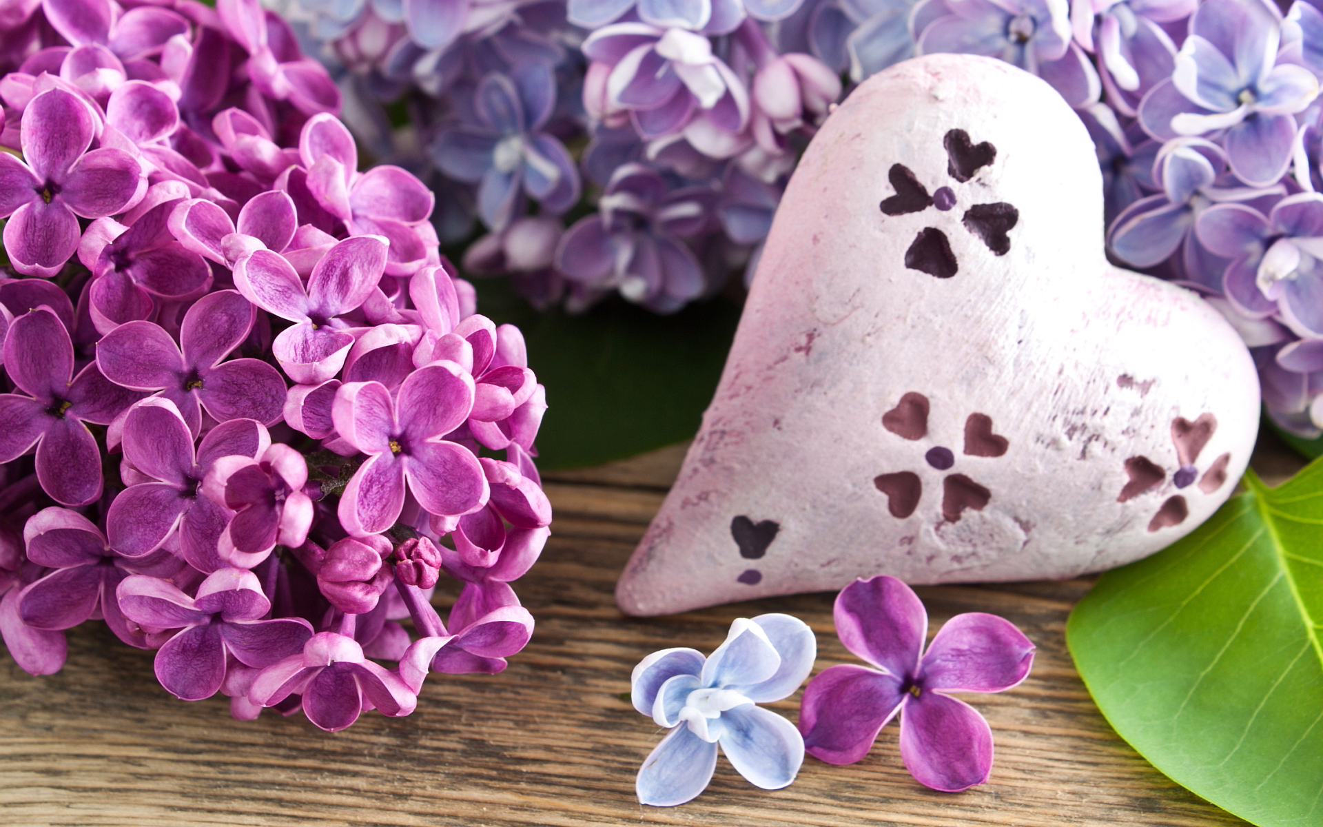 lilac flowers cute