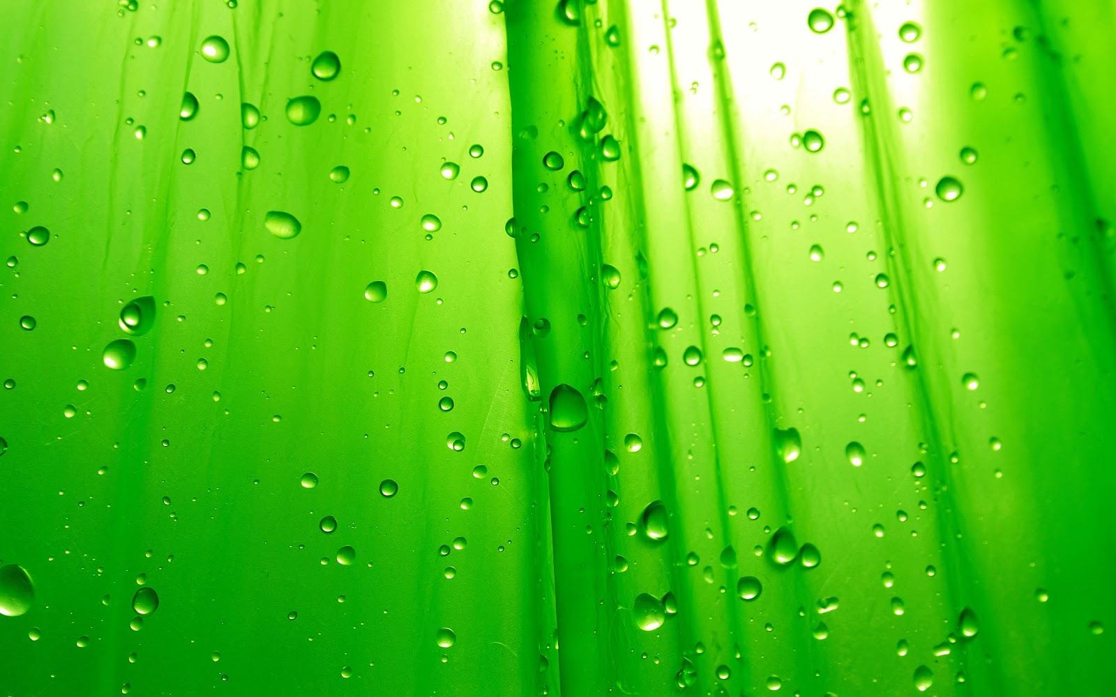 lime green wallpaper
