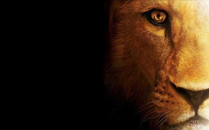 lion animal images