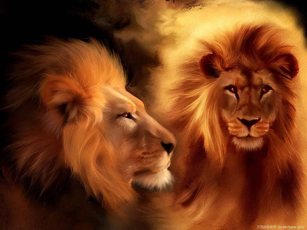 lion images for desktop