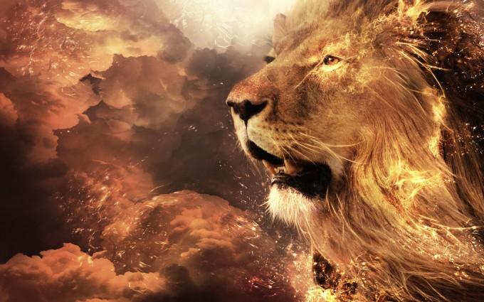 lion wallpaper in hd