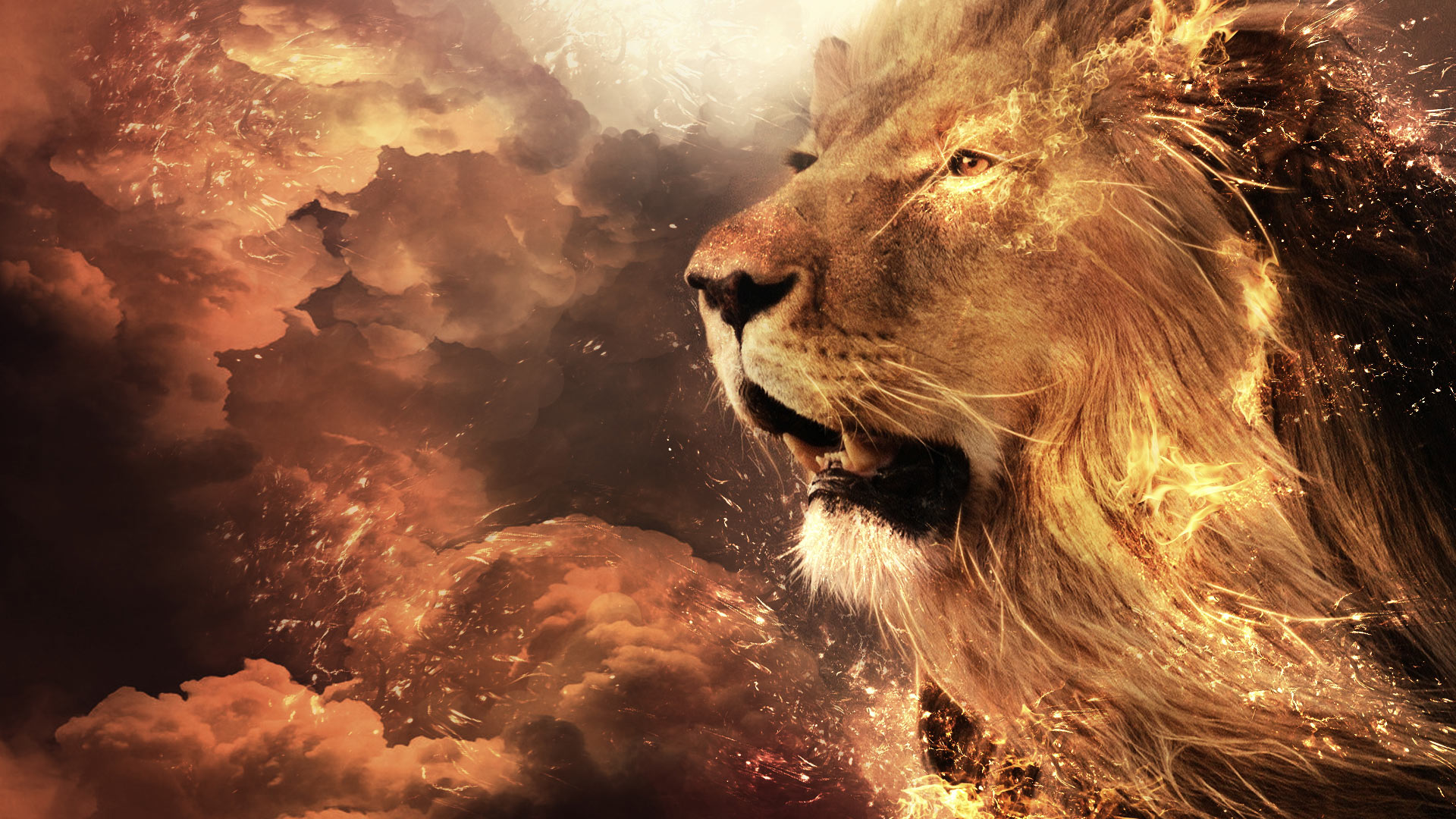 lion wallpaper in hd