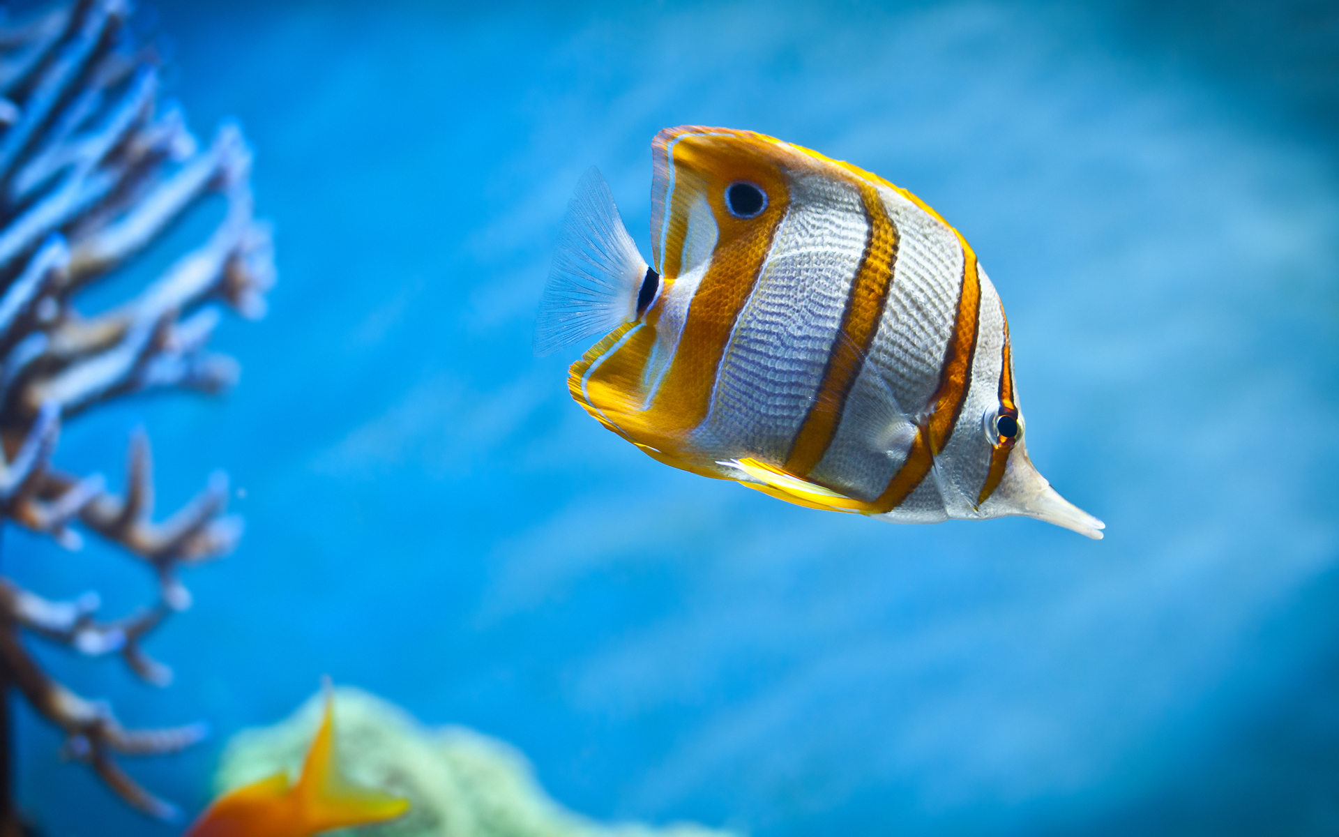 live fish wallpaper download