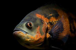 live fish wallpaper free