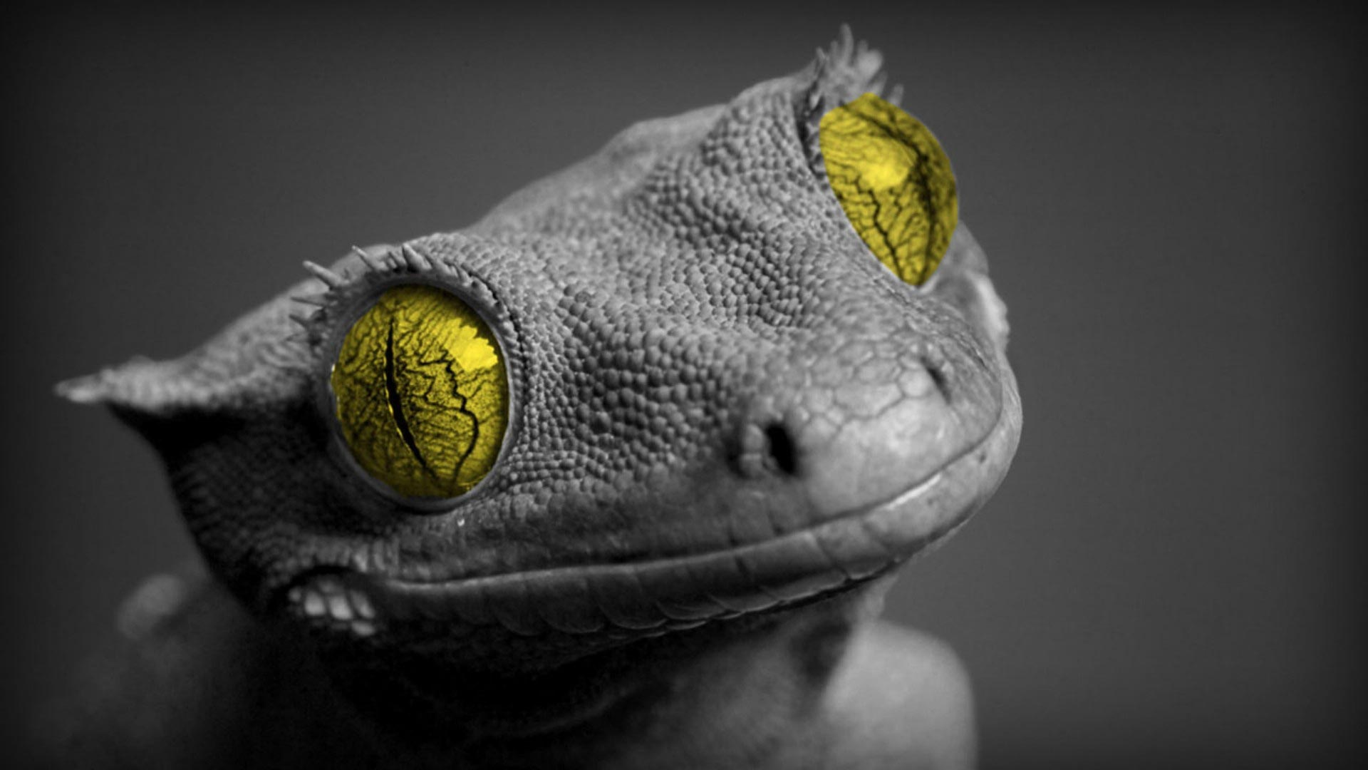 lizard image