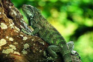 lizard wallpaper home