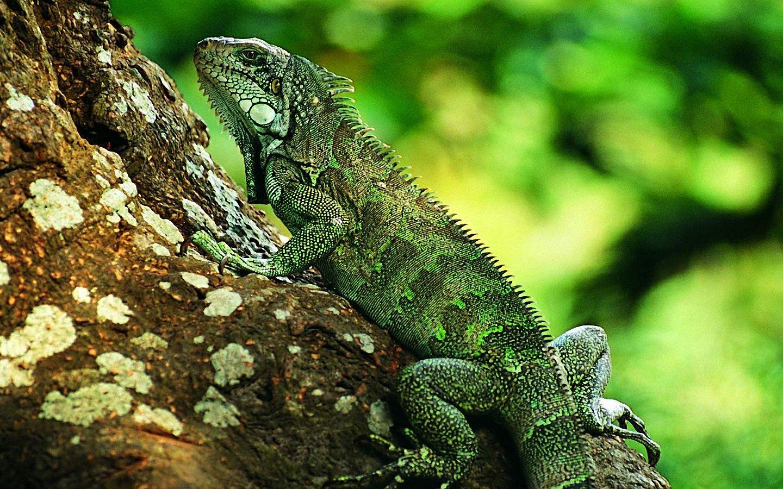 lizard wallpaper home - HD Desktop Wallpapers | 4k HD