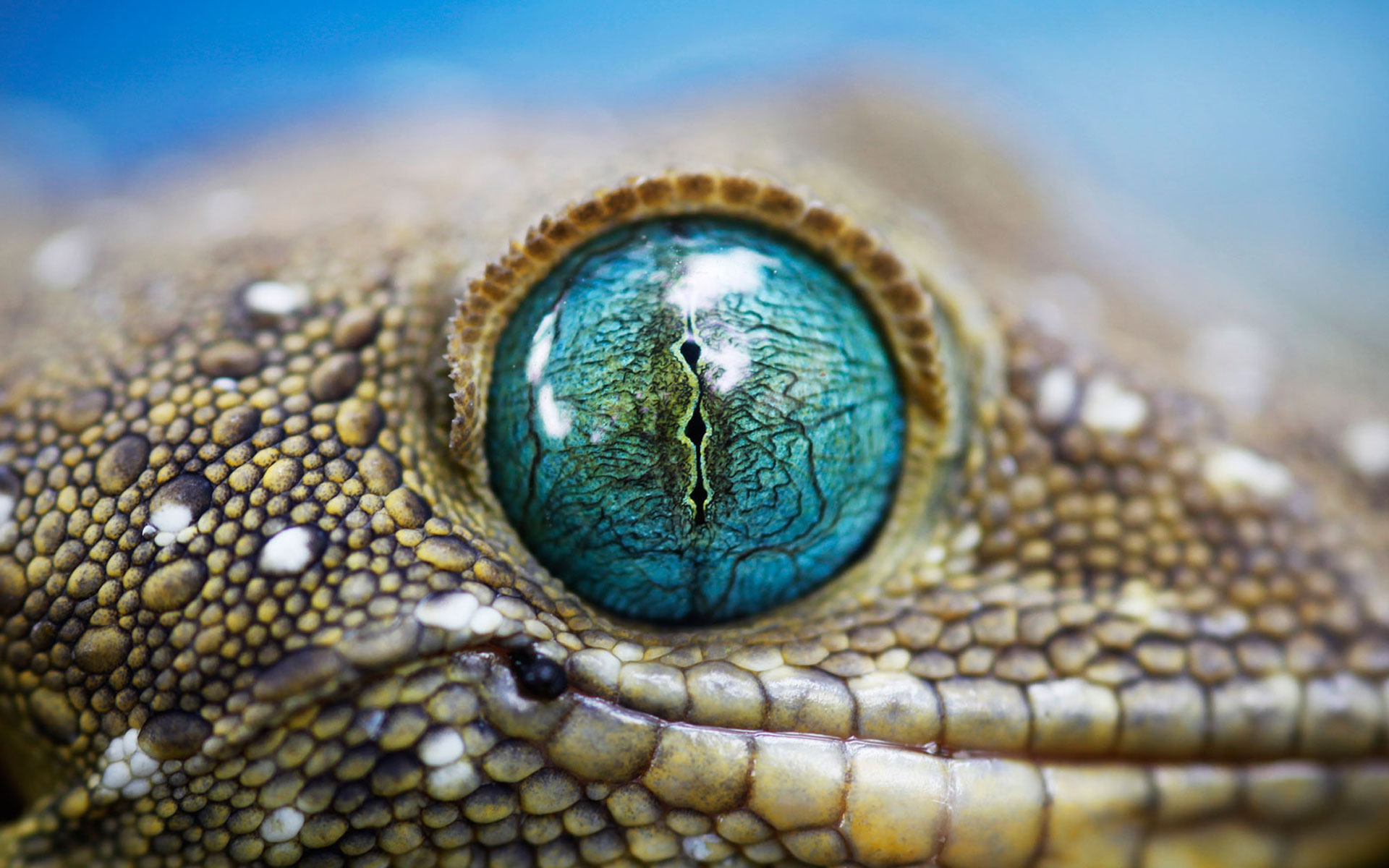 lizards images free