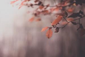 lovely leaves