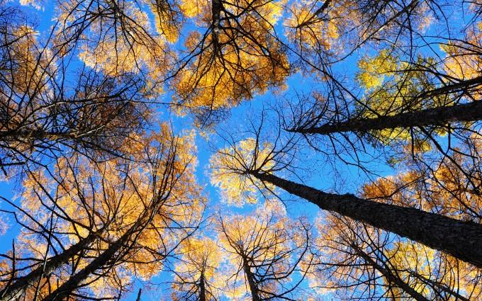lovely wallpaper forest