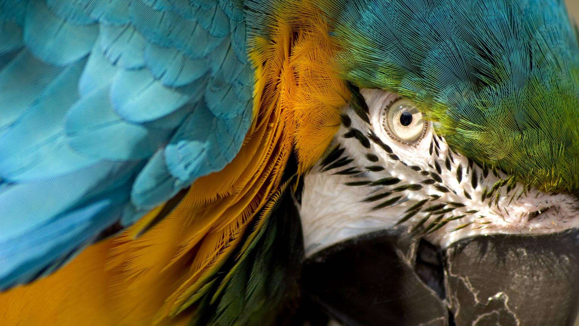 macaw images