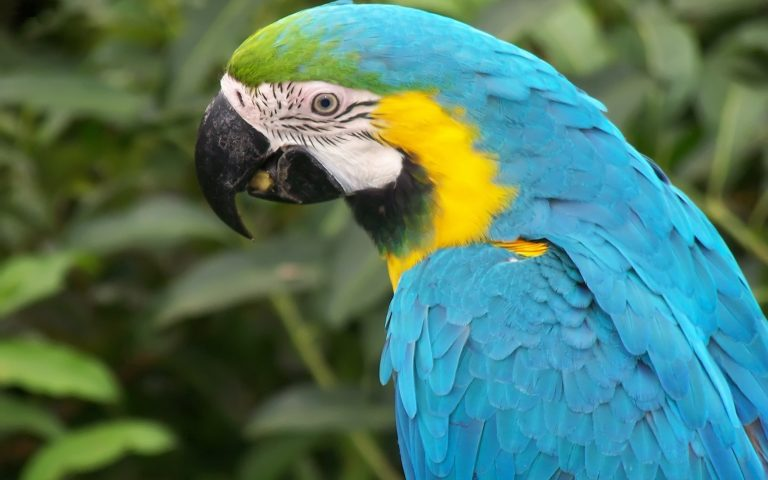 information about parrot bird