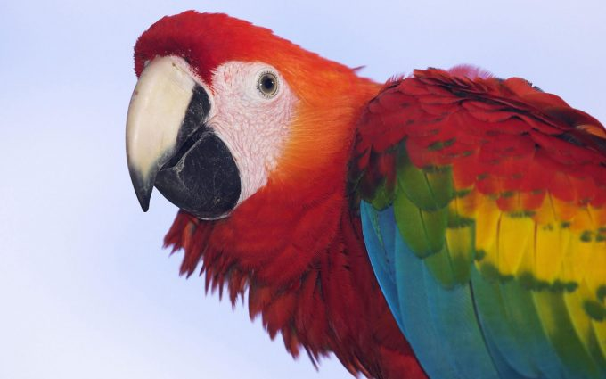 macaw parrot pictures free