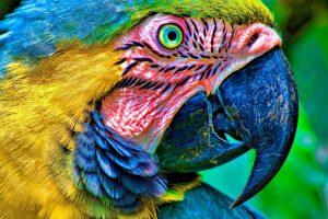 macaw parrot wallpaper hd
