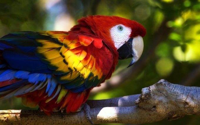 macaw photos