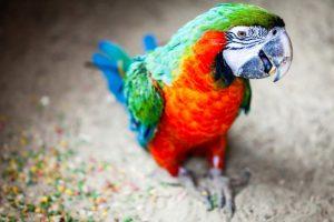 macaw pics