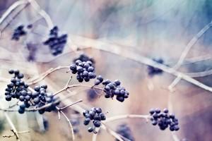 macro wallpaper berries