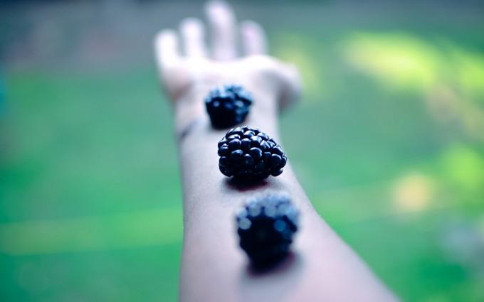 macro wallpaper blackberries