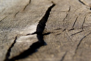 macro wallpaper brown