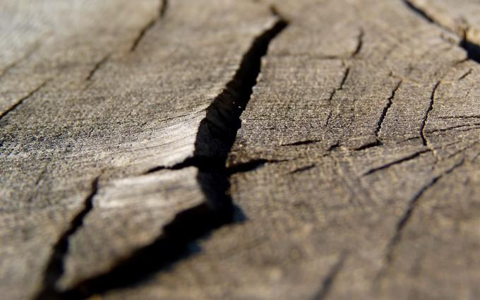 macro wallpaper brown