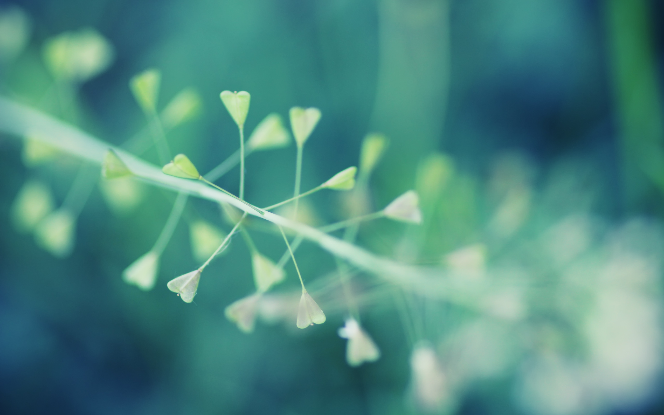 macro wallpaper download
