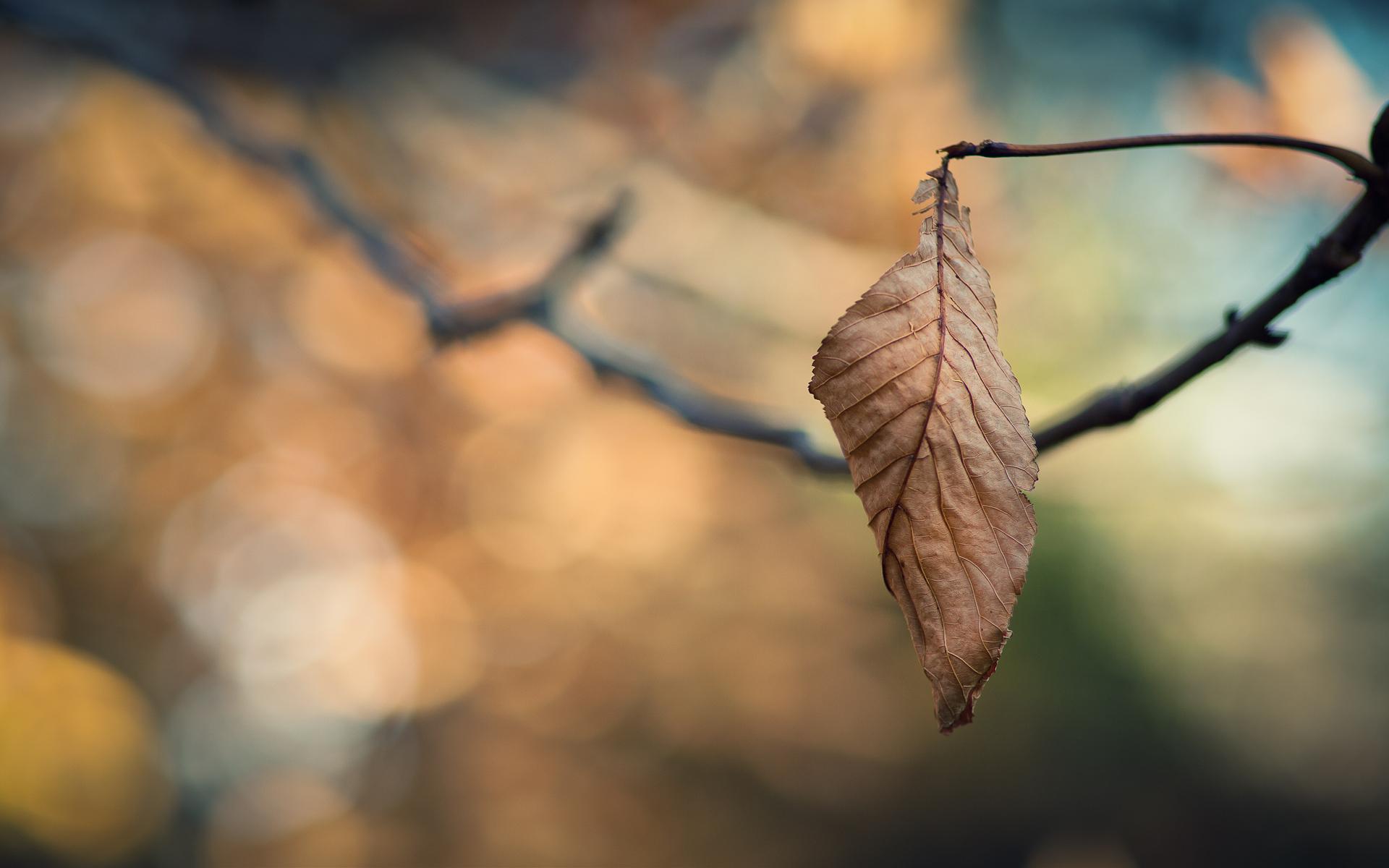 macro wallpaper dry leaf