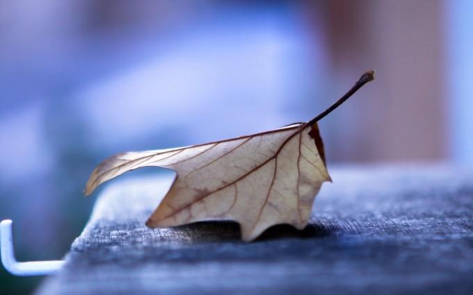 macro wallpaper leaf dried